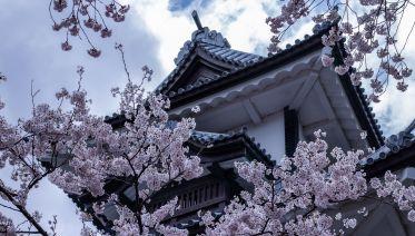 Tanuki 11-Day Budget Tour of Japan