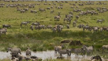 Tanzania Ndutu Safari: Three Days
