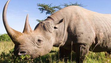 Tanzania Safari In Style