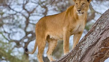 Tanzania Wildlife Breakaway - 7 Days