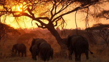 Tanzania Wildlife  Camping Safari