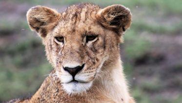 Tanzania Wildlife Safari Moshi Start