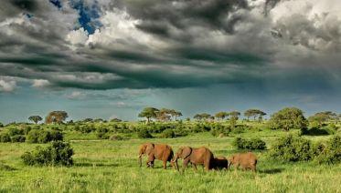 Taste Of Tanzania Safari