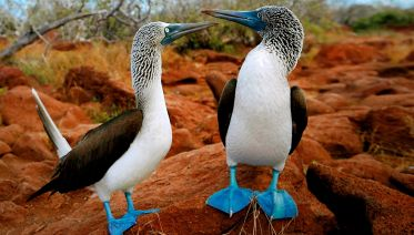 The Best Of Galapagos