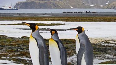 The Falklands and South Georgia