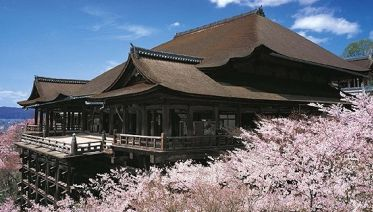 The Golden Route Japan: Cherry Blossom Tour