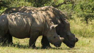 The Great Southern Africa Safari