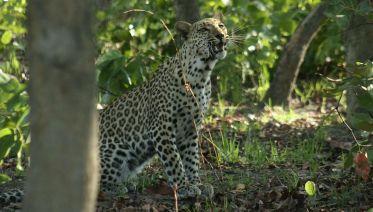 The Kokomo Safari - 17 Nights / 18 Days Safari