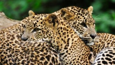 The Local Way - Sri Lanka - Free Upgrade To Private Tour Available