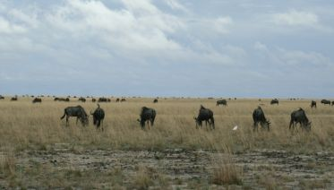 The Pizi Safari - 11 Nights / 12 Days Safari