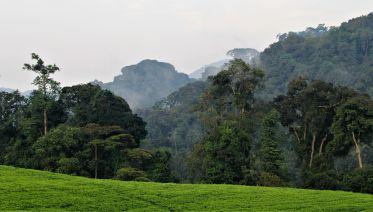Three Day Rwanda Gorilla Trekking Safari