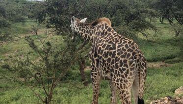 Three-Day Safari: Serengeti & Ngorongoro