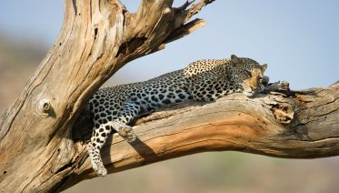 Three-Day Samburu Safari