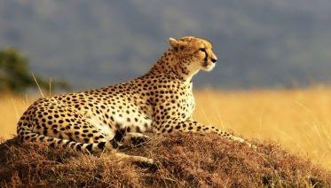 Through The Rift Valley
