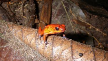 Tortuguero National Park Adventure 2D/1N