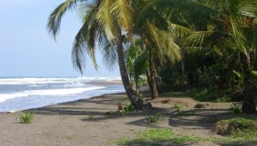 Tortuguero National Park Adventure 4D/3N