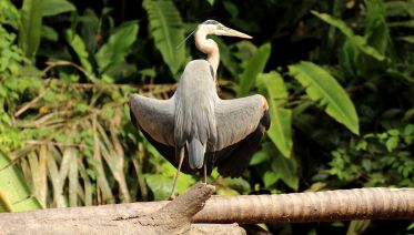 Tortuguero National Park Adventure