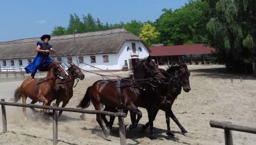 Traditional Horse Show in Lajosmizse