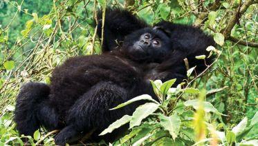 Troop To The Gorillas 2017-18
