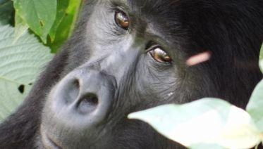 Troop To The Gorillas 6D/5N