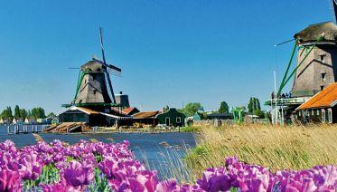 Tulips & Windmills (2022)