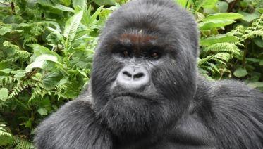 Twelve-Day Uganda Safari