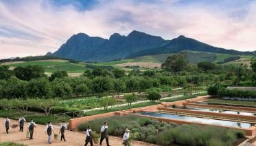 Ultimate Foodie Tour In Franschhoek