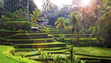 Unforgettable Bali, Private Tour