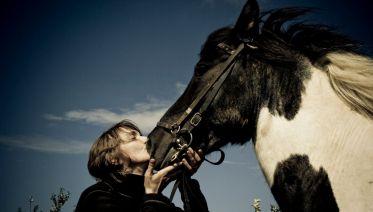 Viking Horse and Golden Circle Tour