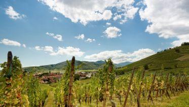 Villages & Vineyards Of Historic Alsace