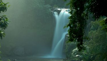 Waterfall, Monkey Forest & Rice Terrace Tour