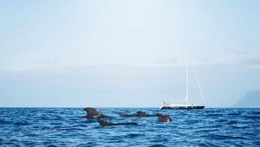 Whale Safari On A Small Yacht & Snorkeling