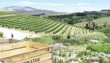 Whale Watching And Hemel-en-Aarde Wine Tour