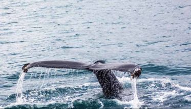 WHALE WATCHING & HERMANUS WINE TOUR (SEASONAL