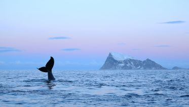Whale Watching In Tromso