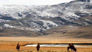 Wild Mongolia and Golden Eagle Festival