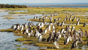 Wildlife & Farm Tour In Patagonia