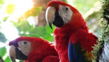 Wildlife Refuge & Cocoa Plantation Tour