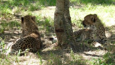 Wildlife Rehabilitation And Conservation Tour