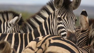 Wildlife Safari & Wine Tasting In Western Cape