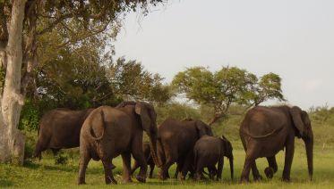 Wildlife Safari In Selous  Game Reserve