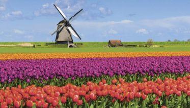 Windmills, Tulips & Belgian Delights with London