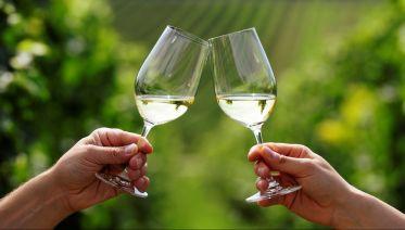 Wine Tour In Georgia