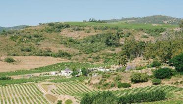 Wine Tour In Swartland