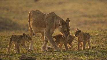South Luangwa National Park Tours