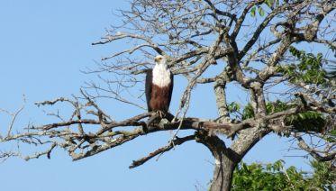 Zululand And Kruger Wildlife + Cape Escape