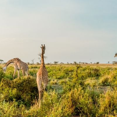 10 Best Africa Tours & Trips 2019/2020 (with 1886 Reviews