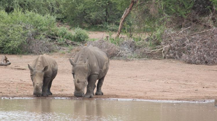 1 Day's Safari in Pilanesberg National Park