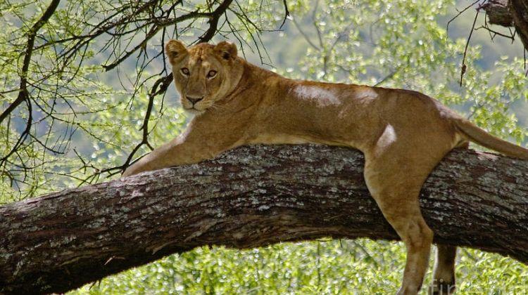 1 Day Safari in Lake Manyara National park