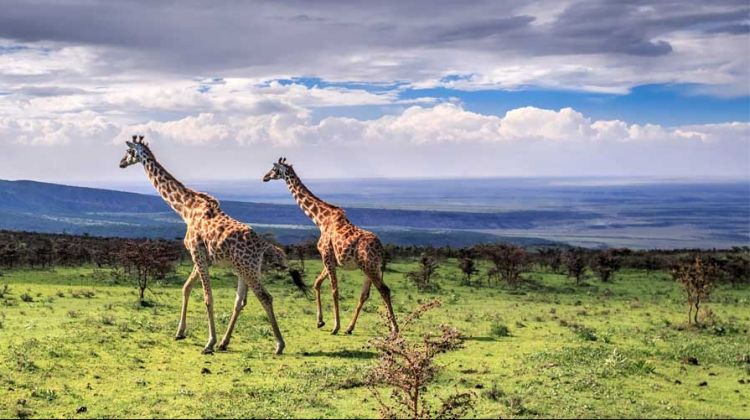 1-Day Safari Ngorongoro Crater